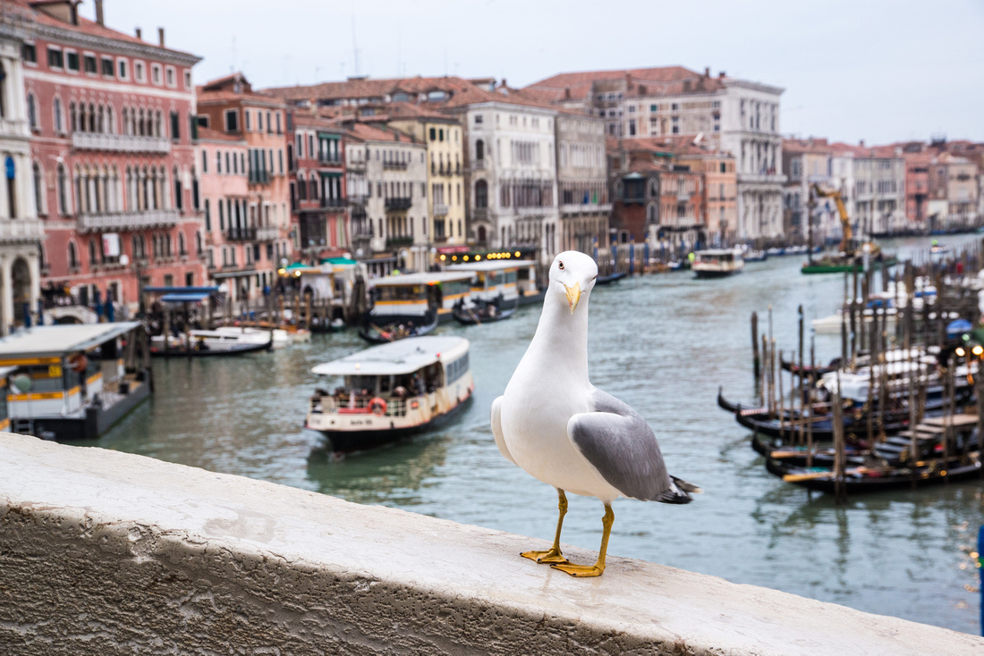 Venice postcards - Didier Cayrac - 2017 - 26