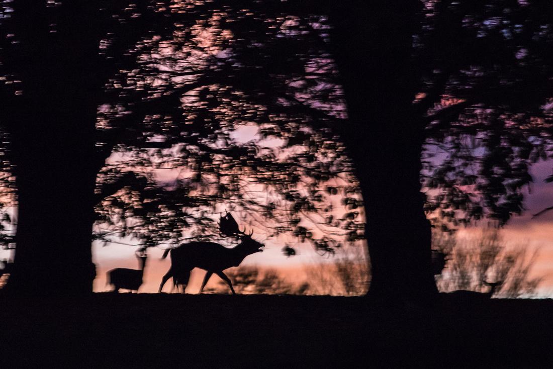 Knole Park, Sevenoaks, UK